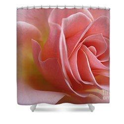 Gentle Pink Rose Shower Curtain by Tara  Shalton