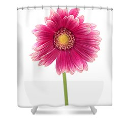 Gerbera Shower Curtain by Sebastian Musial