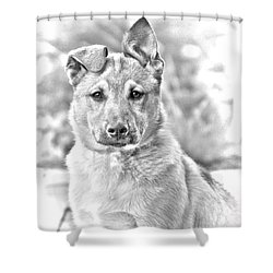 German Shepard Puppy Shower Curtain by James BO  Insogna