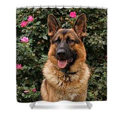 German Shepherd Dog Shower Curtain by Sandy Keeton