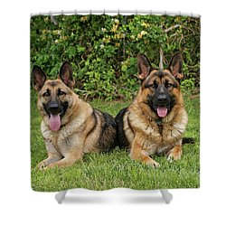 German Shepherds - Mother And Son Shower Curtain by Sandy Keeton