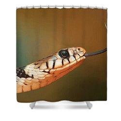Get Over Here Shower Curtain by Ayse Deniz