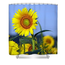 Getting To The Sun Shower Curtain by Amanda Barcon