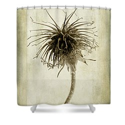 Geum Urbanum In Sepia Shower Curtain by John Edwards