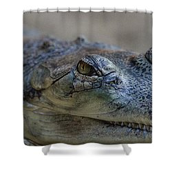 Gharial Smile Shower Curtain by Ruth Jolly