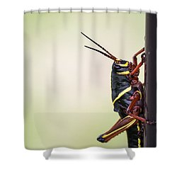 Giant Eastern Lubber Grasshopper Shower Curtain by Edward Fielding