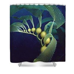 Giant Kelp Macrocystis Pyrifera Detail Shower Curtain by Flip Nicklin