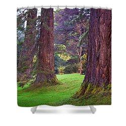 Giant Sequoias II. Benmore Botanical Garden. Scotland Shower Curtain by Jenny Rainbow