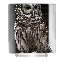Give A Hoot Shower Curtain by John Haldane