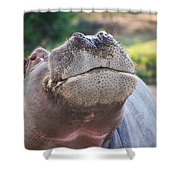 Give Me A Kiss Hippo Shower Curtain by Eti Reid
