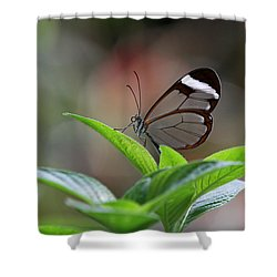 Glasswing Butterfly Shower Curtain by Juergen Roth