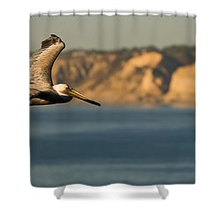 Gliding Pelican Shower Curtain by Sebastian Musial