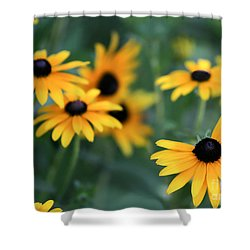 Glorious Garden Of Black Eyed Susans Shower Curtain by Sabrina L Ryan