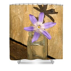 Glory Of The Snow In A Jar Shower Curtain by Chris Berry