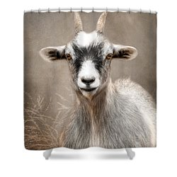 Goat Portrait Shower Curtain by Lori Deiter