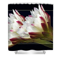 God's Trumpets Shower Curtain by Phyllis Denton