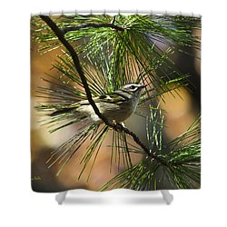 Golden-crowned Kinglet Shower Curtain by Christina Rollo