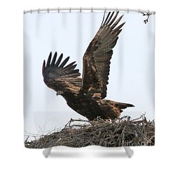 Shower Curtain featuring the photograph Golden Eagle Takes Off by Bill Gabbert
