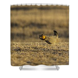 Golden Light On The Prairie Shower Curtain by Thomas Young