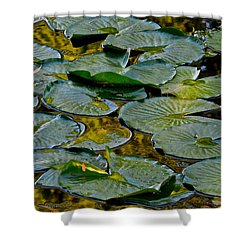 Golden Lilly Pads Shower Curtain by Frozen in Time Fine Art Photography