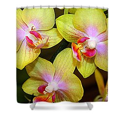 Golden Orchids Shower Curtain by Dora Sofia Caputo Photographic Art and Design