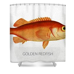 Golden Redfish Shower Curtain by Aged Pixel