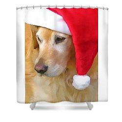 Golden Retriever Dog In Santa Hat  Shower Curtain by Jennie Marie Schell