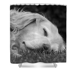 Golden Retriever Dog Sweet Dreams Black And White Shower Curtain by Jennie Marie Schell