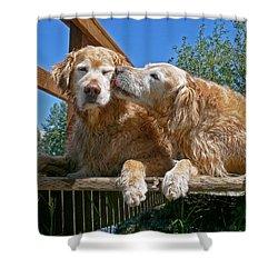 Golden Retriever Dogs The Kiss Shower Curtain by Jennie Marie Schell