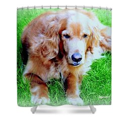 Golden Retriever Shower Curtain by Kay Novy