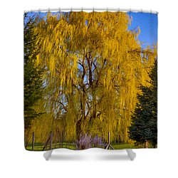 Golden Willow Tree Shower Curtain by Omaste Witkowski