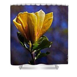 Golden Yellow Magnolia Blossom Shower Curtain by Byron Varvarigos