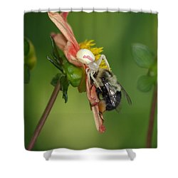 Goldenrod Spider Shower Curtain by James Peterson