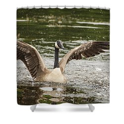 Goose Action Shower Curtain by Karol Livote