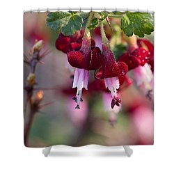 Gooseberry Flowers Shower Curtain by Peggy Collins