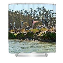 Gossip - Group Of Brown Pelican Pelecanus Occidentalis On The Elkhorn Slough. Shower Curtain by Jamie Pham