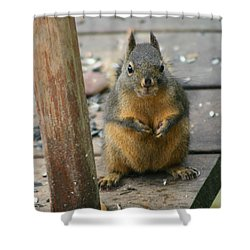 Got Food? Shower Curtain by Kym Backland