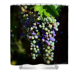 Grape Pre-vino Shower Curtain by Patrick Witz