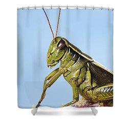 Grasshopper Close-up Shower Curtain by Thomas Kitchin & Victoria Hurst