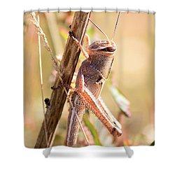 Grasshopper In The Marsh Shower Curtain by Carol Groenen