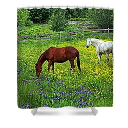 Grazing Amongst The Wildflowers Shower Curtain by Karol Livote