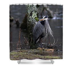 Great Blue Heron On The Clinch River Shower Curtain by Douglas Stucky