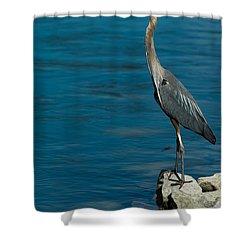 Great Blue Heron Shower Curtain by Sebastian Musial