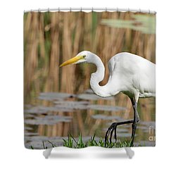 Great White Egret By The River Shower Curtain by Sabrina L Ryan