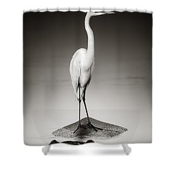 Great White Egret On Hippo Shower Curtain by Johan Swanepoel