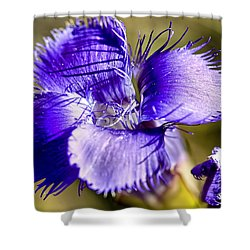Greater Fringed Gentian Shower Curtain by Teresa Zieba