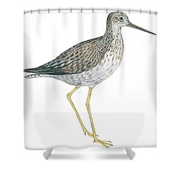 Greater Yellowlegs  Shower Curtain by Anonymous