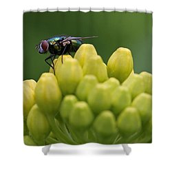 Green Bottle Fly Macro Shower Curtain by Juergen Roth