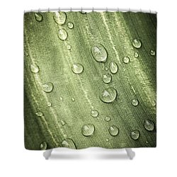 Green Leaf With Raindrops Shower Curtain by Elena Elisseeva