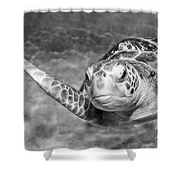 Green Sea Turtle. Shower Curtain by Jamie Pham